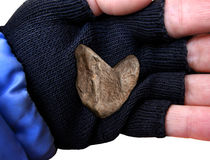 Closeup of Heart Shaped rock in middle of hand. Closeup of hand with glove holding heart shaped rock royalty free stock photo