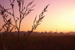 Closeup herbs on a multicolored sunset. Autumn background. Soft Royalty Free Stock Images