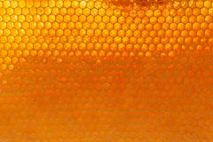 Closeup of honey bee cells background. In a natural light royalty free stock images