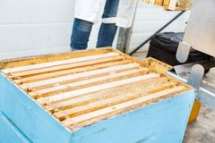 Closeup Of Honeycomb Frames In Apiary Royalty Free Stock Images