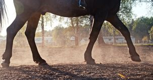 Closeup of the hooves stock video footage
