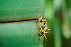 Closeup of hornets on the side of a green metal barrel located in the garden stock photo
