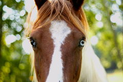 Closeup of a horse. Close up of a horse royalty free stock image