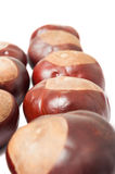 Closeup of horse chestnuts Royalty Free Stock Photography