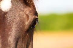 Closeup horse eye snout. Stock Photo