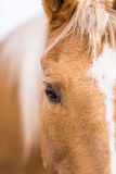 Closeup of a horse face Royalty Free Stock Photography