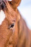 Closeup of a horse face Stock Photo