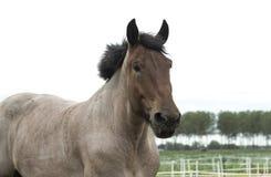Closeup of horse head Royalty Free Stock Photography