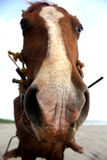 Closeup Horse Portrait Stock Image