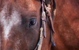 Closeup of Horse's Eye Royalty Free Stock Image