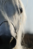 Closeup of horse's eye Stock Image