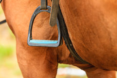 Closeup of horse and stirrup. Stock Photography
