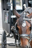 Closeup of horses head with carriage behind Royalty Free Stock Photo