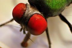 Closeup housefly. Close up macro artificial housefly Stock Images