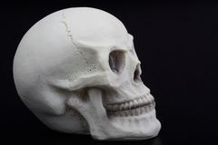 Closeup of an human skull Royalty Free Stock Photo