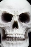 Closeup of an human skull Royalty Free Stock Images
