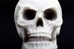 Closeup of an human skull Stock Photos