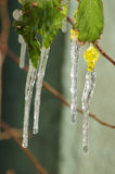Closeup of Icicles hanging Stock Photo