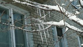 Closeup icicles on trees in winter. Near old house with white windows stock footage