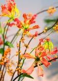 Closeup of Ikebana. Here is a macro shot of ikebana Royalty Free Stock Photos