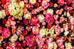 Closeup image of beautiful flowers wall background. With amazing red and white roses royalty free stock image