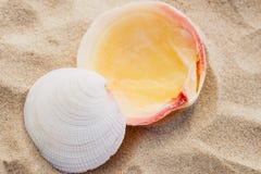 Closeup image of beautiful sea shell on sandy beach in summer Stock Image