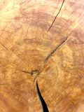 Old Growth Tree Cross Section Stock Image