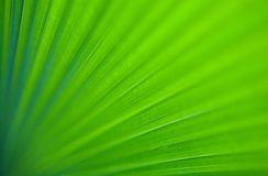 Closeup image of green giant palm leaf Stock Photos