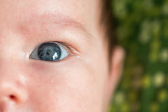 Closeup image of infant eye Royalty Free Stock Photo