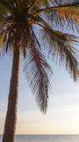Closeup image of palm tree on ocean beach at dawn Stock Photography