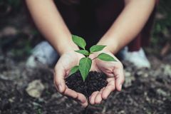 Closeup image of woman`s hands holding soil and small tree to grow Royalty Free Stock Image
