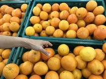 Closeup image of a woman selecting tangerine or oranges Stock Photos