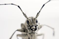 Closeup of an Insect Head Stock Photos