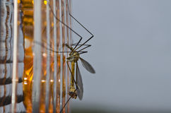 Closeup of an insect Royalty Free Stock Photos