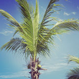 Closeup instagram of palm tree swayingin the wind with frame Royalty Free Stock Images