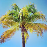 Closeup instagram of palm tree swayingin the wind with frame Stock Photos