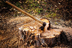 Closeup of iron axe stuck in wood log. Royalty Free Stock Image