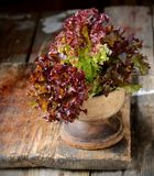 Closeup isolate fresh lettuces in wooden bowl on Stock Image