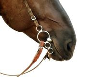 Closeup isolated horse`s nose on a white background with a harne stock image
