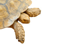 Closeup of isolated turtle. Closeup of turtle on isolated background Royalty Free Stock Photography