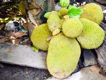 Closeup jak fruit on tree background Stock Photo