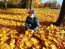 Closeup young lad with fall leaves royalty free stock images