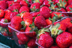 Closeup of juicy, fresh, ecologically produced, red strawberries Stock Photos