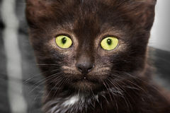 Closeup of a kitten Royalty Free Stock Photo