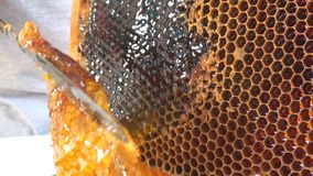Closeup of a knife opens honeycomb with honey on a hive frame. Honey production technology and manual work on apiary stock video