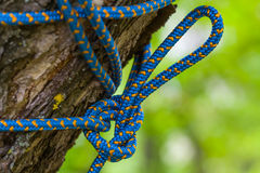 Closeup knotted rope Stock Images