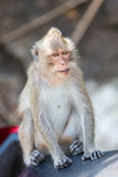 Closeup of Koh Chang monkey sitting on a scooter seat, Thailand Stock Photo