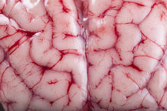 Closeup from a lamb brain showing its texture Stock Image
