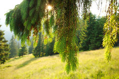 Closeup landscape mountain forest at sunset Stock Photo