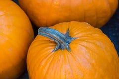 Closeup of a large pumpkin Royalty Free Stock Image